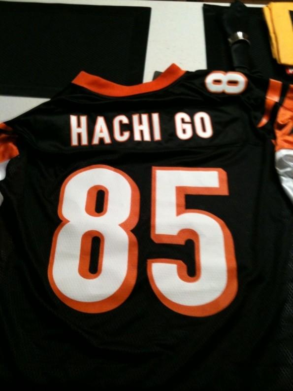 Chad Hachi Go