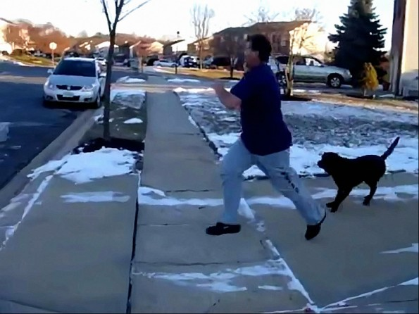 Ravens Fan Runs Through Electric Dog Fence In Celebration