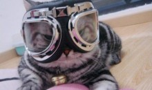 Olympic Ski Kitty (PIC)