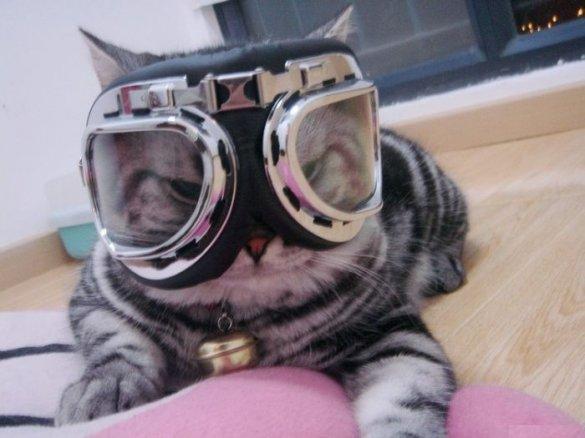 Ski Kitty