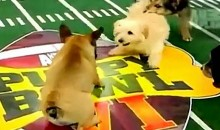 In Case You Missed It, Here's A Look At The 2010 Puppy Bowl