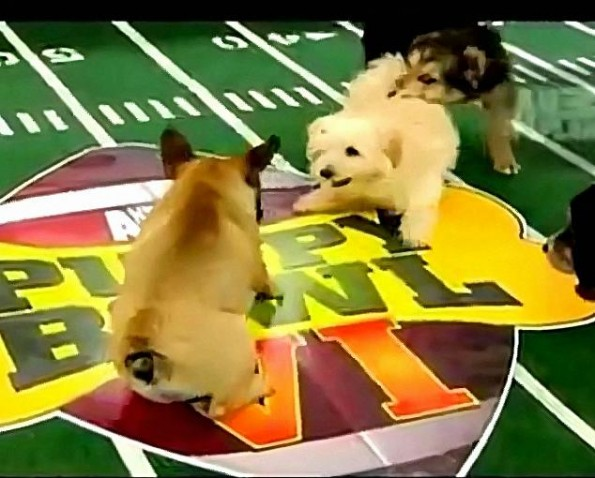 The 2010 Puppy Bowl