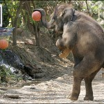 This Elephant is better than Michael Jordan