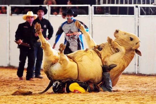 bull back