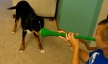 Vuvuzela vs. Dog (Video)