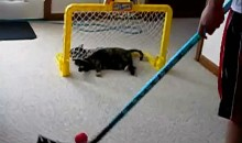 A Cat Playing Hockey Drives Me Crazy
