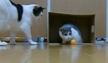 Cats Playing Soccer…Yes, Things Really Are That Slow Today