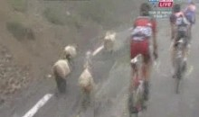 Herd Of Sheep Interrupt 17th Stange Of Tour de France (Video)