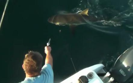 pop a cap in bull shark's head