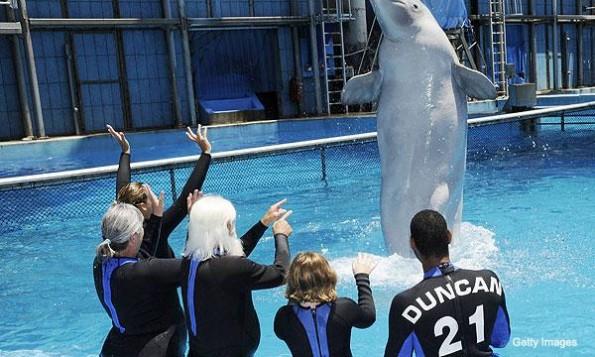 tim duncan, white wizard, beluga whale