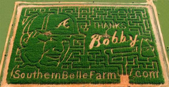 bobby cox corn maze