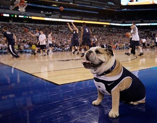 Butler-Bulldog