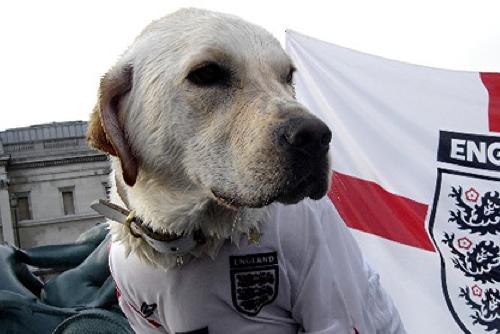 England Soccer Dog