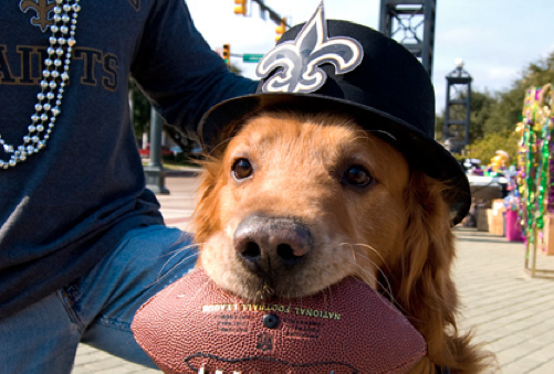 Saints Dog