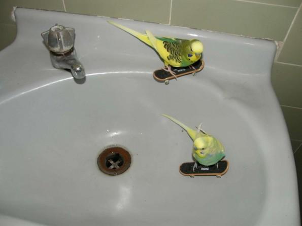 canary skatepark