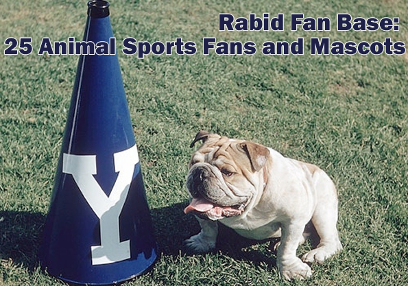 yale-bulldog-fan-base