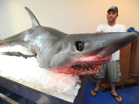 375-Pound Mako Shark Jumps Into Fisherman's Boat (Video)