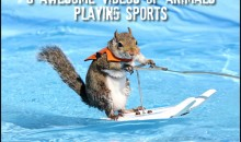 9 Awesome Videos of Animals Playing Sports