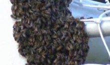 Swarm Of Bees Delays Brazilian Soccer Match, Teams Brawl (Videos)