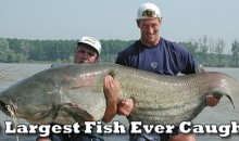 9 Largest Fish Ever Caught