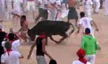 Bull 1, Streaker 0 (Video)