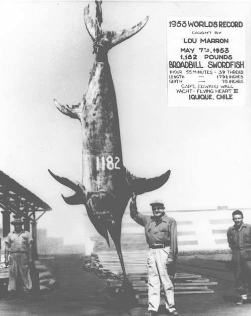 9 largest fish ever caught total pro sports