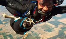 Picture Of The Day: Skydiving Pug Has More Exciting Life Than You
