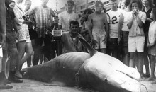 9 Biggest Sharks Ever Caught