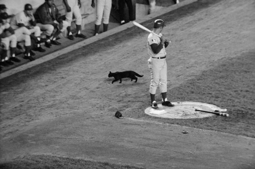 69 cubs ron santo black cat at shea