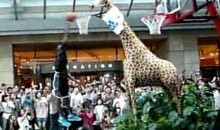 Dwight Howard Dunks On A Giraffe (Video)