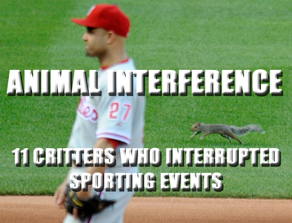 animals at sporting events