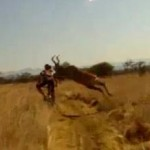 antelope hits mountain biker