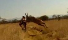 Mountain Biker Gets Destroyed By An Antelope (Video)