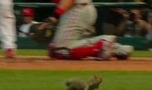 Squirrels Are Invading Busch Stadium! (Video)