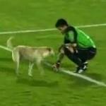 dog on pitch