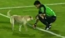Dog Won't Get Off The Field During Copa Sudamericana Match (Video)