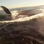 kayaker encounters whale