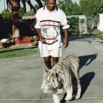 Mike Tyson walking his pet white tiger