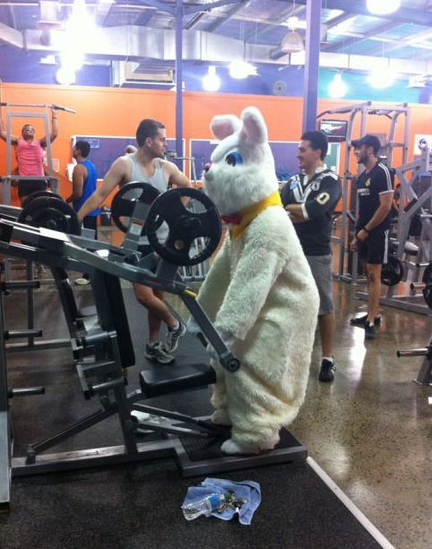 Even Rabbits Need to Workout…