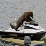 bear on a seadoo