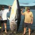 nathan adams blluefin tuna