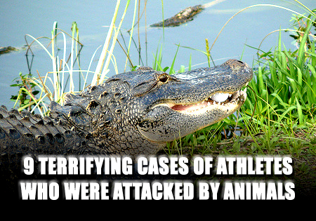 athletes attacked by animals