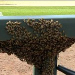 swarm of bees coors field