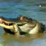 alligator vs snake pga championship