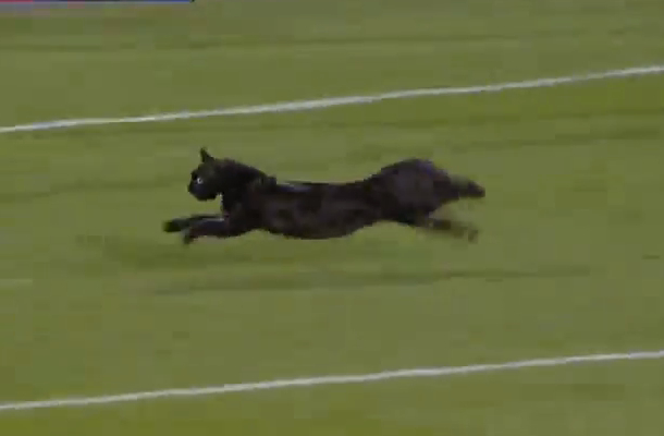 black cat runs across field at toronto fc concacaf champions league