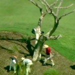 rory mcilroy ball stuck in dead tree