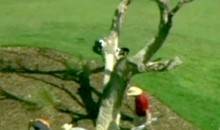 One Of Rory McIlroy's Tee Shots Got Stuck In A Dead Tree On Saturday (Video)