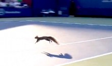 A Squirrel Interrupted Play At The US Open (Video)