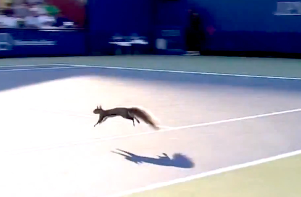 squirrel interrupts play at us open