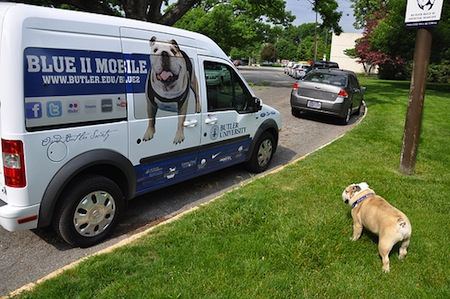 10 butler bulldogs mascot blue ii blue mobile